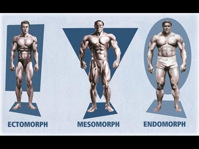 Somatotipo, ¿qué tipo de cuerpo tienes?